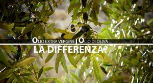 differenza olio d'oliva olio estravergine