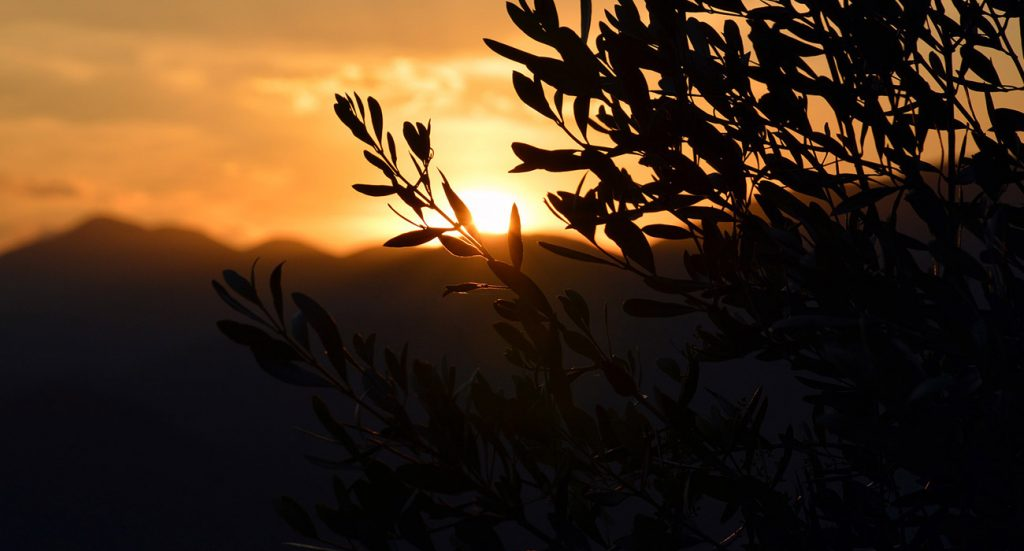 I benefici dell'olio extravergine d'oliva